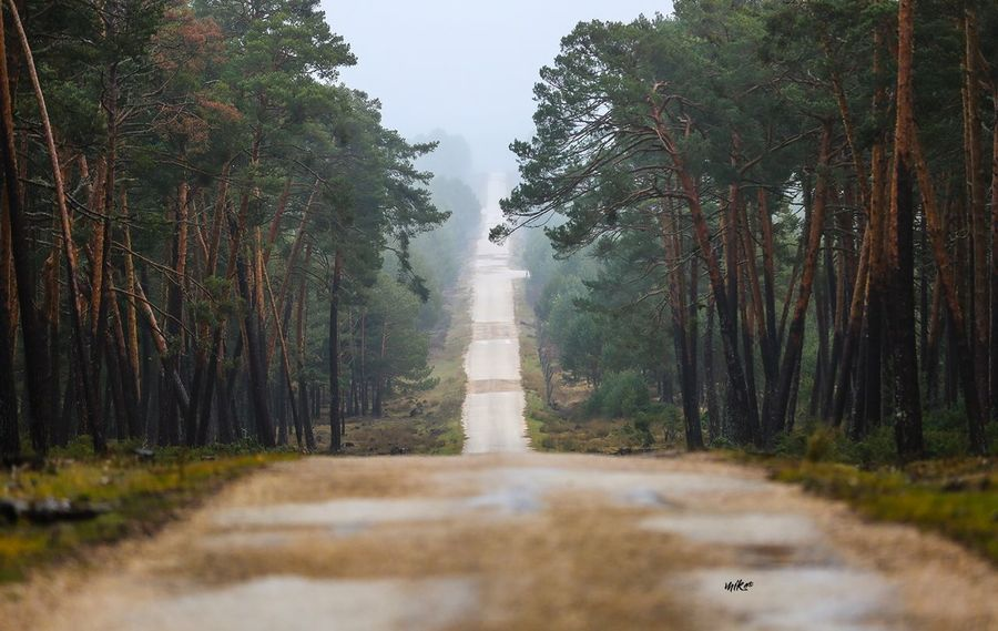 Road to the fog EyeEm Best Shots Travel Destination Beauty In Nature Bestoftheday Fog Tree Nature No People Growth Day Outdoors Forest
