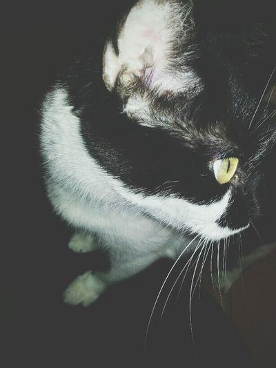 Cats Cat Humanesociety Cutepets