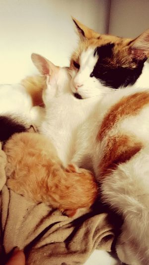 Cat♡ Cats 🐱 Catgraphy Cute♡ Cute Pets Family❤ Cutecat 🐱 Catsagram Cute Animals Cutecat
