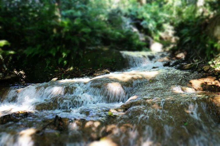 Water Nature Moss River No People Motion Waterfall Forest Outdoors Beauty In Nature Day Mammal
