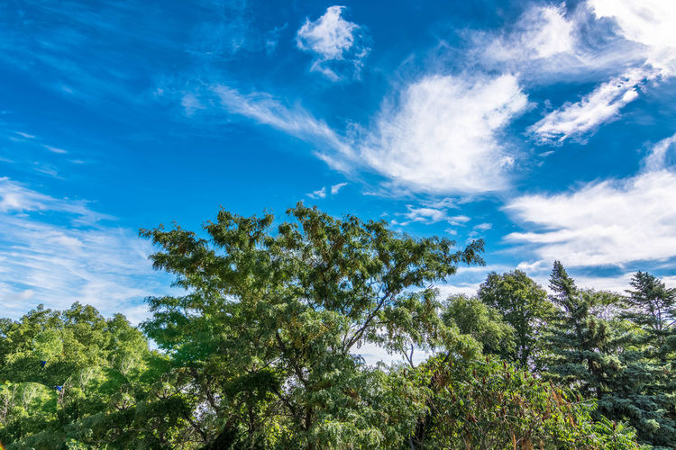 Above Beauty In Nature Blue Cloud - Sky Day Environment Green Color Growth Idyllic Low Angle View Nature No People Non-urban Scene Outdoors Plant Scenics - Nature Sky Sunlight Tranquil Scene Tranquility Tree