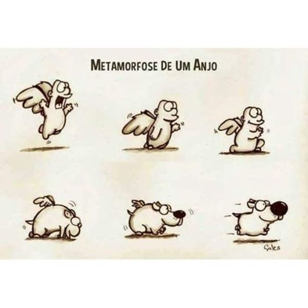 Pequenos anjinhos! Anjinhos Metamorfose Cãozinho Animaisdeestimação