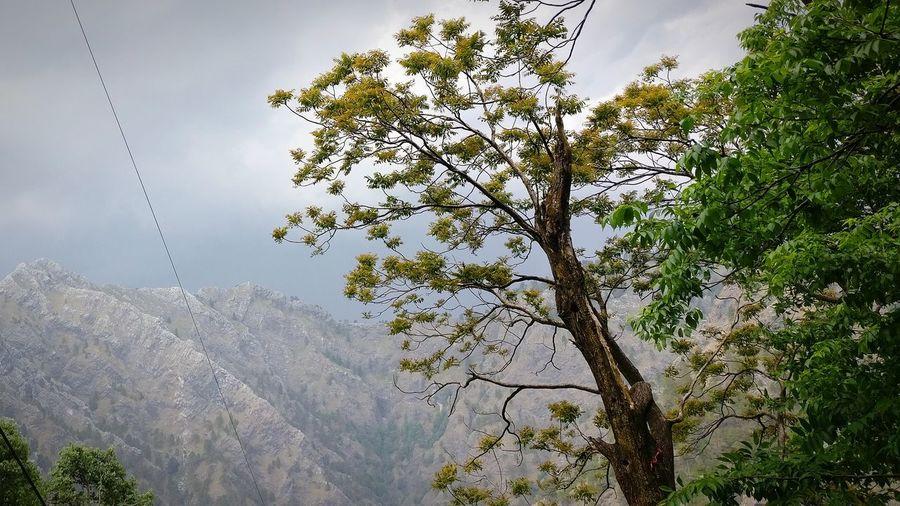 tree in mountain Sky Mountain Heignt Day Tree Bark Green Mountain View Blue Sky Tree Branch Sky Close-up Leaf Vein Single Tree
