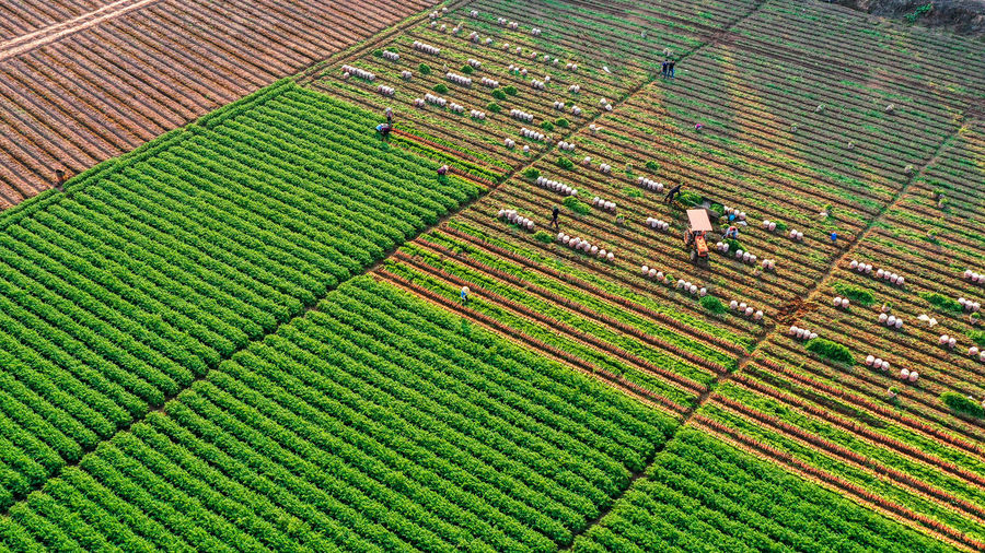 Green agriculture