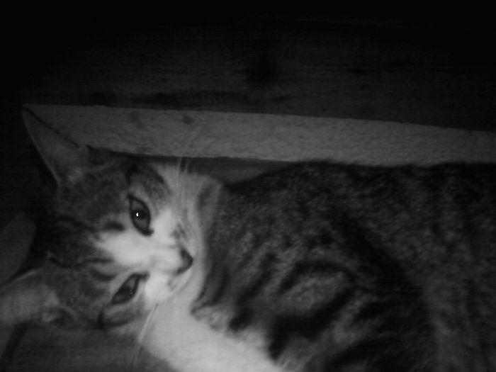 Memme cat Nina monina I Love