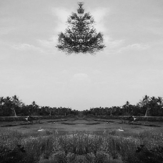 Flying Tree??? :P Instablackandwhite Instamirror :Blackwhite Blackandwhite instacapture bloggius hucciofficial amazing abstract hosteltime coffeeyouneed instatrees tree trees instatree