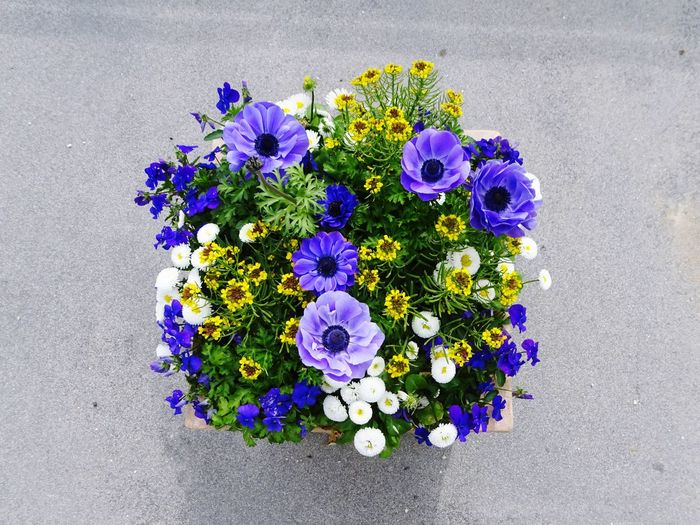 Flower Flowering Plant Fragility Vulnerability  Plant Freshness Purple Beauty In Nature Flower Head Multi Colored Blue High Angle View