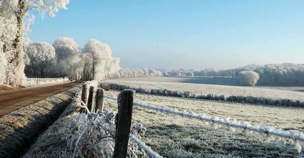 Scenic view of field against clear sky during winter