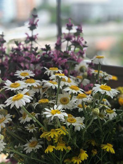 Dünyadaki tüm Muder dag Annelerin Anneler gününü kutlu olsun 🌸🌺🍀 Flower Flowering Plant Plant Vulnerability  Fragility Growth Beauty In Nature