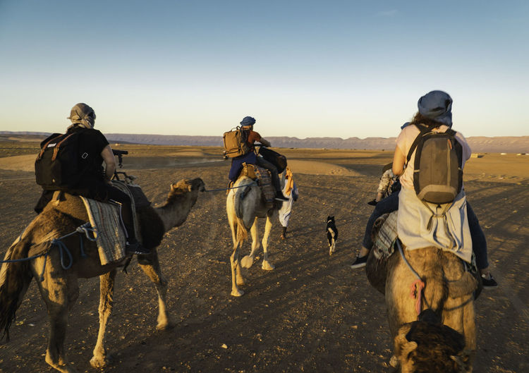 Backpackers riding camels in desert against sky