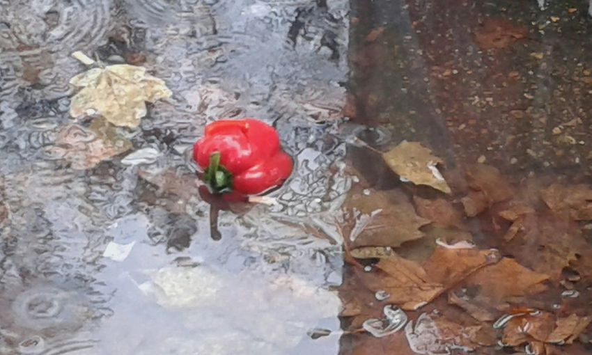 My Photography. Autumn. Rain Leaves Water And Colour Reflection
