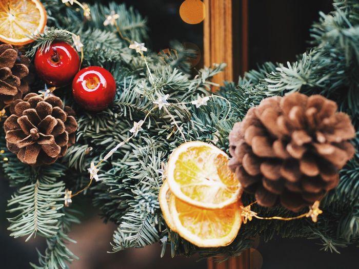 Close-up of christmas tree at night