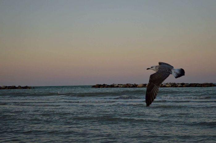 Mare ❤ Gabbiano Nature_collection