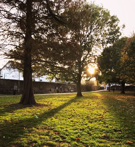 St George's Church Peaceful Moment Gardenofengland Trees Nature Sunlight Tranquility Landscape Beauty In Nature Shadow