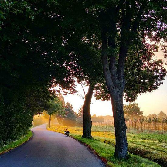 Into the Sun - Biketowork in Autumn! 🍁 Cycling Commuting Bikelove Bicycle Fahrrad Sun Nature Fahrradfahren Biketouring 😚 😍❤️ Nofilter Picoftheday Instamood Fitfornix Sport Goodmorning Hamburg