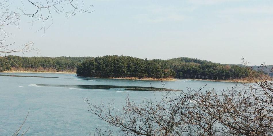 Korea Winter Lake Shades Of Winter Water No People Nature Bird Tree Beauty In Nature Animals In The Wild