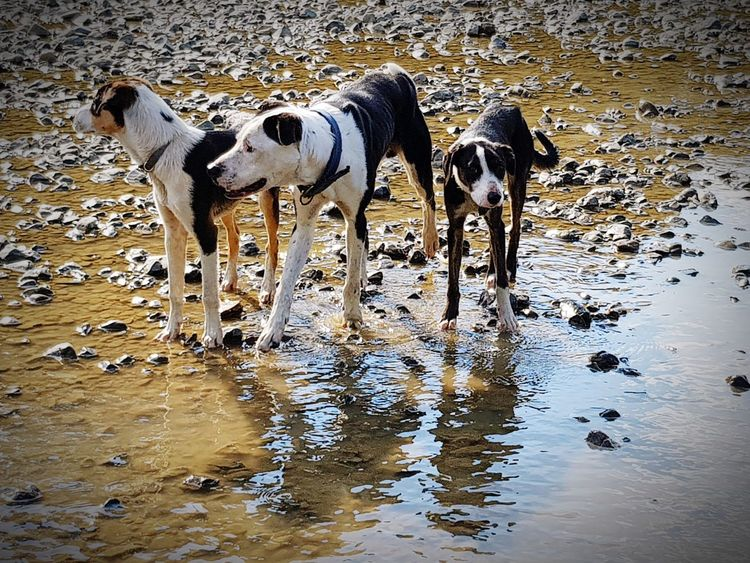 Dad and kids Dog Domestic Animals Water Pets Outdoors No People Furr Animal Themes Rocks And Water Day Threedogs Dogslife Dogs Of Summer Dogsarefamily Blackandwhitedog High Angle View Fun