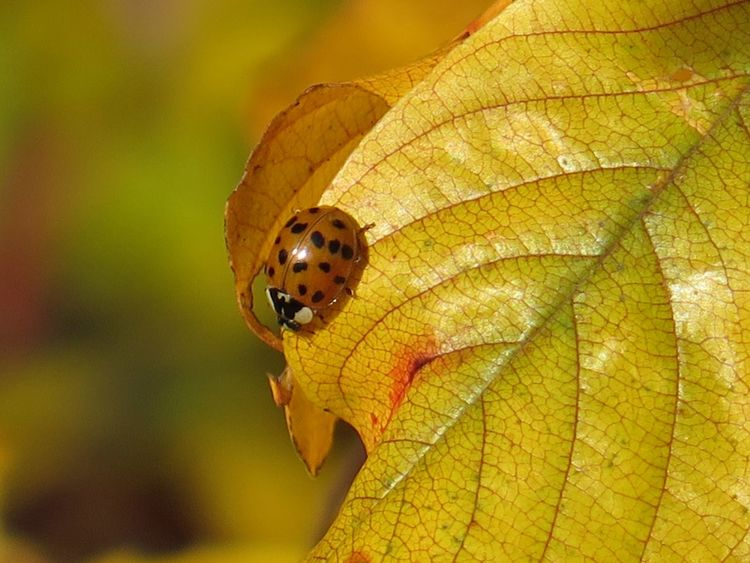 Naturelover Nature Photography Insect Collection Autumn Colors Sunny Day Ladybug