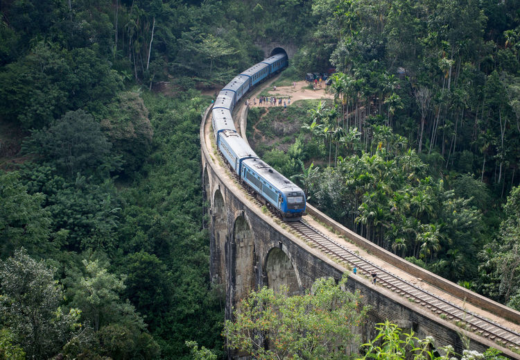 Train on bridge amidst trees in forest