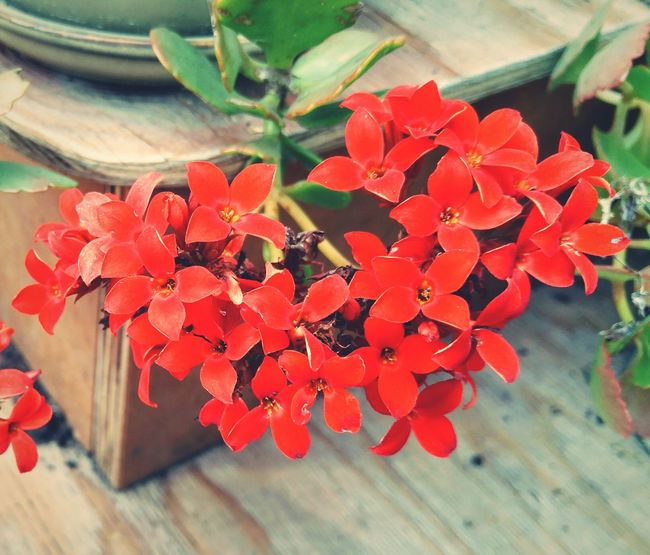 Tranquility Flowers Fragility Hanging Close-up No People Beauty In Nature