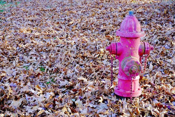 Shenandoah National Park Shenandoah USA Indian Summer StillLifePhotography Landscape ADayToRemember Fall Beauty Fall