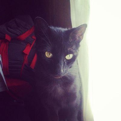 Freyathekitty Freya Cat Catlover GatoNegro Gatu Teamo MiNegra Mirada  Negra Loca Tierna
