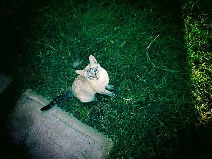 Luna Cat♡ Green Serouisly  Animals Grass Cat