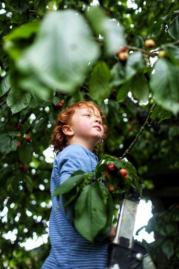 Cherry picking Portrait People Growth Garden Cherry Tree Child Childhood Children Only One Person Tree Fruit Outdoors Smiling Nature Healthy Eating Freshness Redhead Day Low Angle View