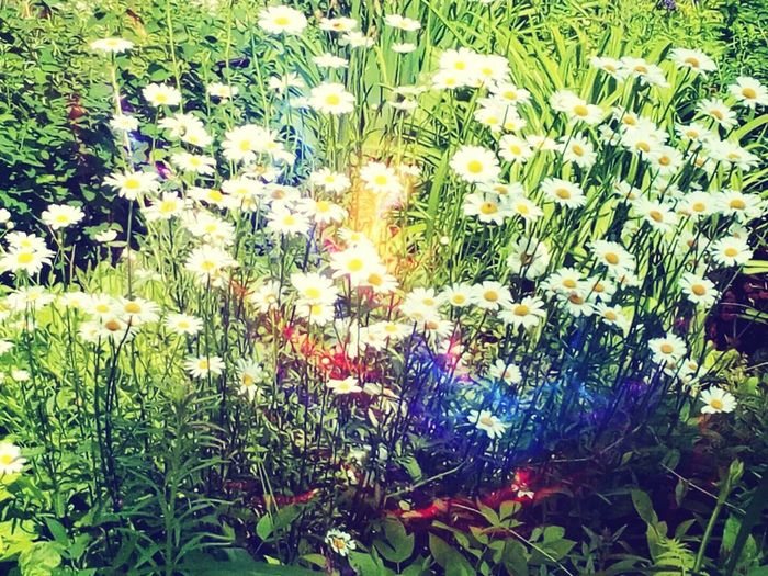 Flower Nature Summer Beauty In Nature First Eyeem Photo