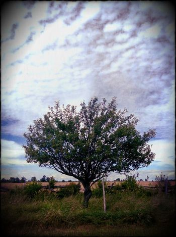 For The Love Of Trees ~ Spirit Of The Tree