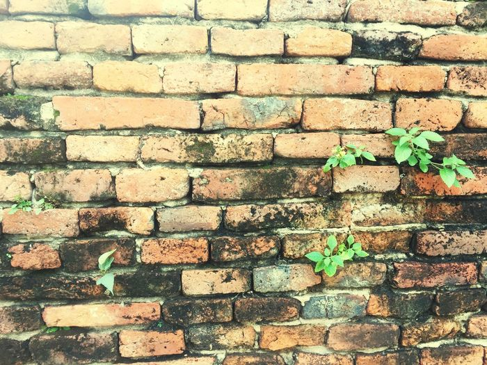 Orange Block Brick Wall Wall - Building Feature Backgrounds Plant Green Color Leaf Day Built Structure Full Frame Architecture Outdoors No People Nature Growth Close-up