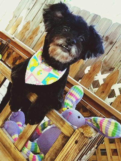 Pets One Animal Dog DogLove Dogmodel No People Dog Grooming Dog Life Eye Of Ky Dog❤ Dog Photography Dog Days Dog Groomer Dog Lover My Photography Cute Dogs Of EyeEm