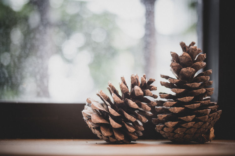 Pine cones on wooden table with window light.
