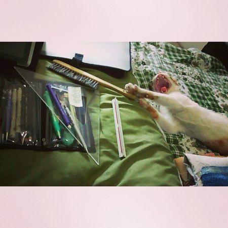 Cat Cute Legolas Bocejo yawns Eu ralando e meu gato bocejando! While I study my cat yawns !