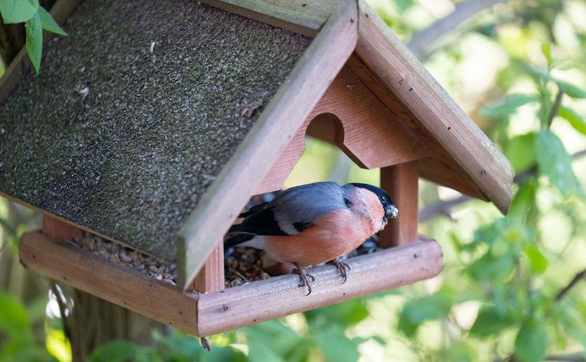 Close-up of bird perching on birdhouse