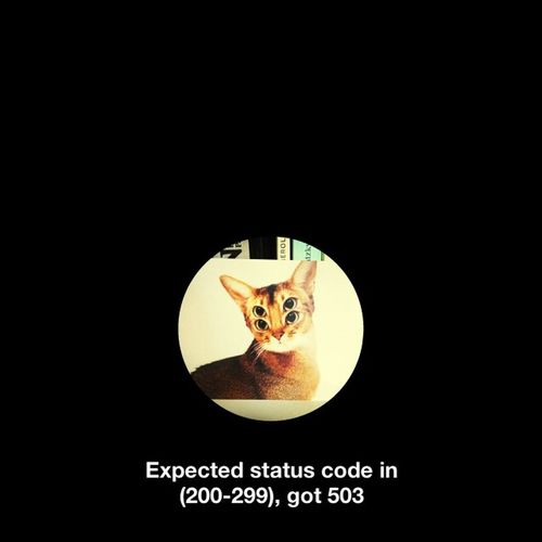 EyeEm Error Screencapture Cat Eyes Meow