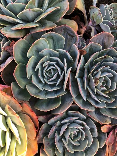 Full Frame Growth Plant Succulent Plant Beauty In Nature Backgrounds Cactus Pattern High Angle View Plant Part Botany Leaf Outdoors Close-up No People Nature Green Color Natural Pattern Day