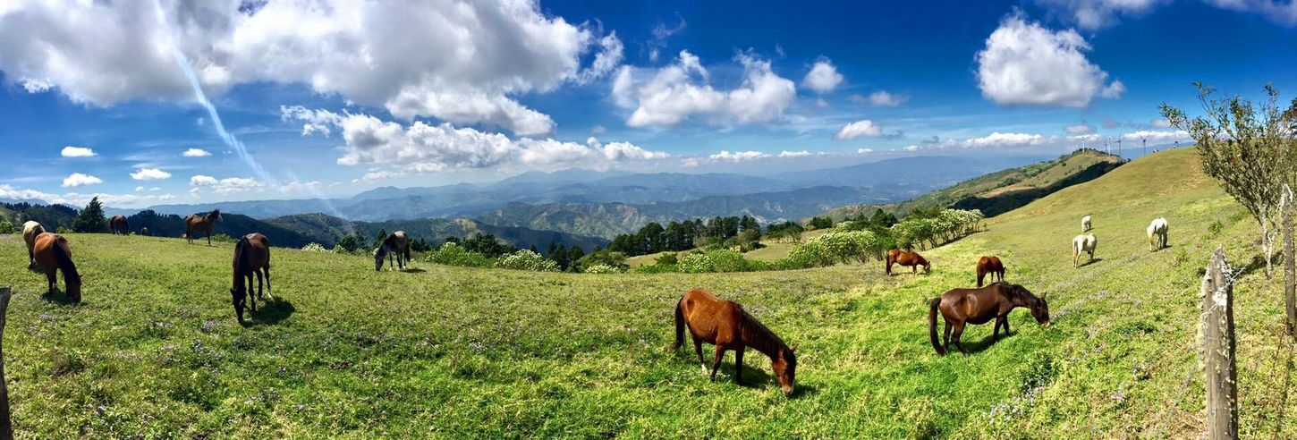 Santa Ana's mountains Mountain Sky Cloud - Sky Horse Animal Themes Nature Landscape Grass Beauty In Nature Tranquility Day Mountain Range Outdoors Scenics Costa Rica❤ Costa Rica