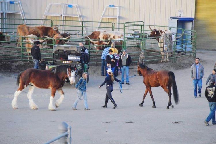 Rodeo Denver Horses Horse Horse Riding Horse Life Horse Photography  Animal Animals Cowboy Cowboys Parade