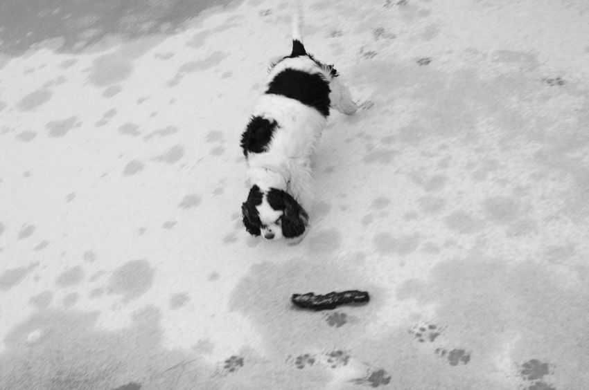 Pets Black And White Black N White Collection Humans Best Friend Bird Perspective Sniffing On Ice Frozen Lake Prints Foot Prints