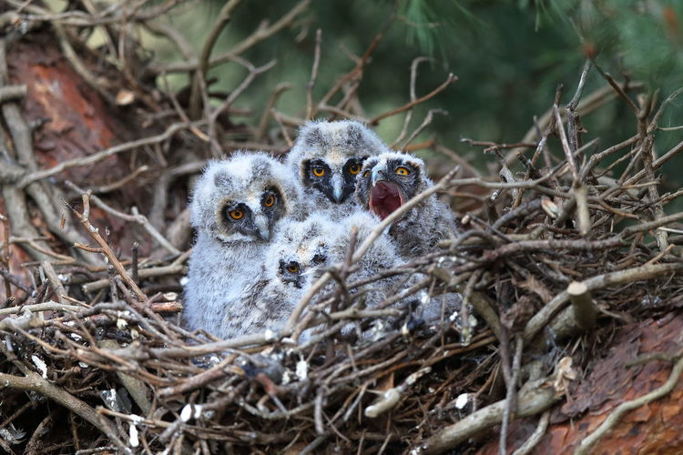 Portrait of young birds in nest