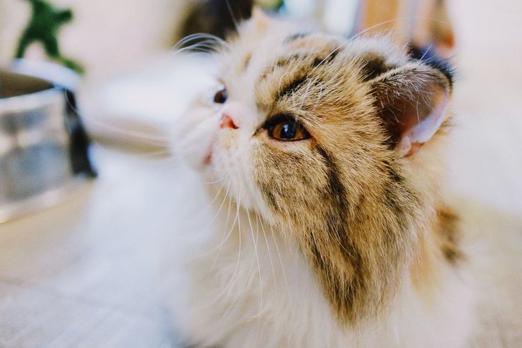 Close-Up Of Kitten Looking Away On Table