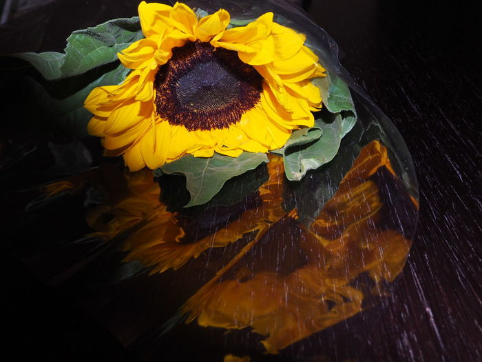 High angle view of sunflower