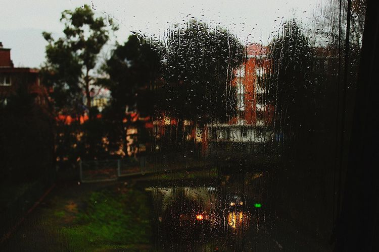 Drop Tree Water Wet Window No People Spraying
