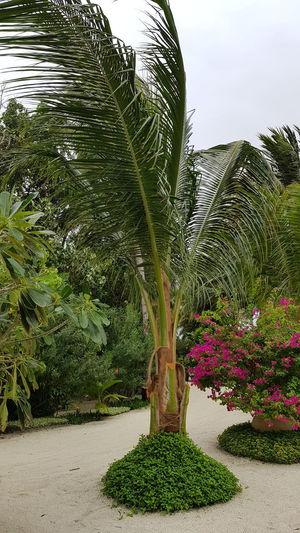 Palm trees in garden
