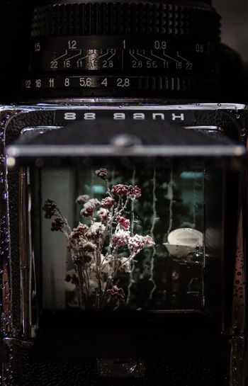 Analog Photo Kiev 88 Soviet Cameras Camera Shaft Flower Indoors  Photo Shop-window Winter