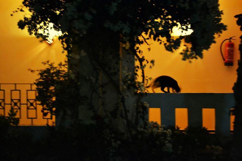 Shadow Light And Shadow Lights Trees Cat Animals Nature Traveling Eye4photography  EyeEm Best Shots