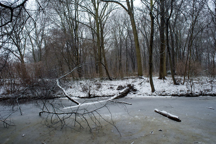 Berlin Branch City City Life Cold Temperature Europe Frozen Frozen Lake Frozen Water Lake Nature No People Outdoors Snow Strees Streetphotography Tree Tree Trees Winter Winter