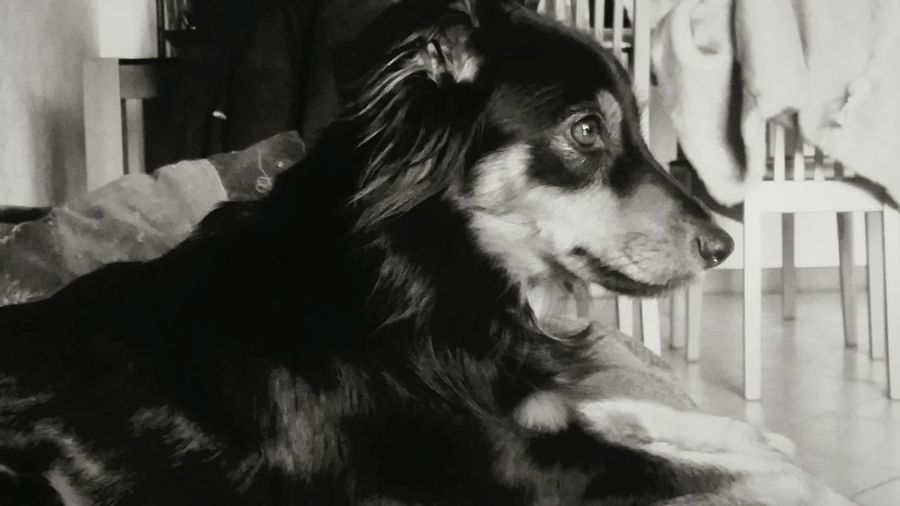 Naira ♥ Dogs Profilo Blackandwhite Good Pirofile So Cute Beautiful Animal So True So Sweet ♥ What Are YOU Looking At? Dogslife