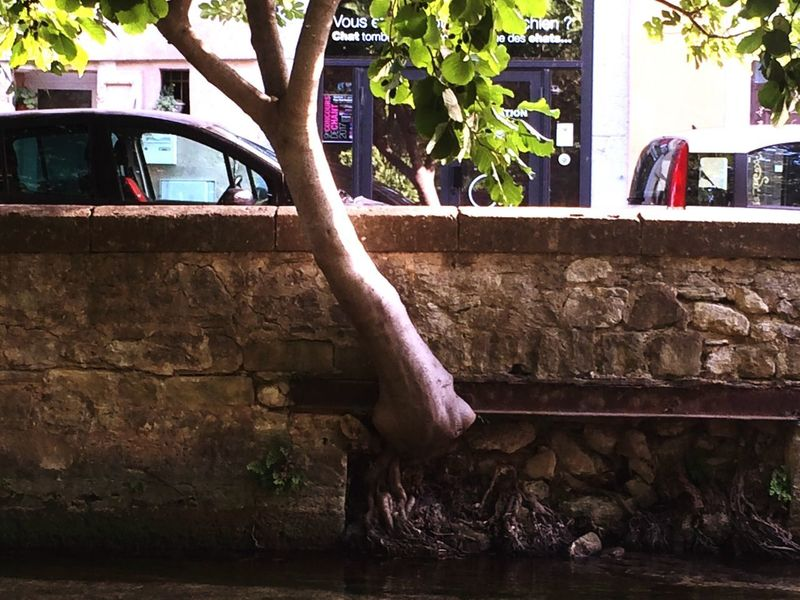 Tree Art Isle Sur La Sorgue Architecture Nature Low Section Been There. Wonderful Day Motion